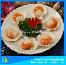 excellent frozen superior scallop meat fine exporter