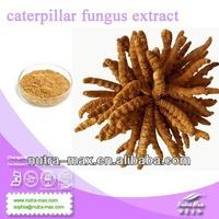 NutraMax Inc. - polysaccharides 10% 20% 30% yarsagumba//caterpillar fungus extract