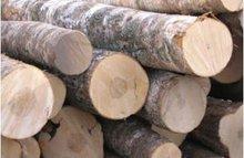 birch veneer log