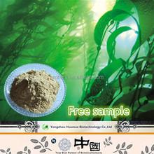 New Product Halal & Kosher Cert Organic Bladderwrack Seaweed Kelp Extract