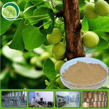 Pure natural Ginkgo biloba extract/Ginkgo biloba leaf extract 24:6