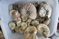 WHOLESALE PRICE ! beautiful Natural polished Jade white Pattern Ammonite Fossil Madagascar