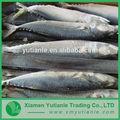 hiway 중국 공급 업체 냉동 야생 알래스카 연어 생선