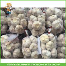 High Quality Chinese Supplier Pure White Garlic (500gr x 20bags Per Carton)