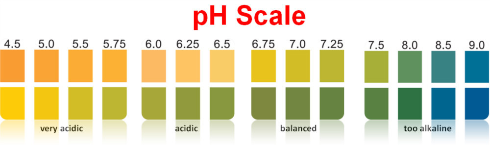 ph paper color scale In general, litmus paper is red below ph of 45 and blue above a ph of 83 if the paper turns purple, this indicates the ph is near neutral red paper that does not change color indicates the sample is an acid.