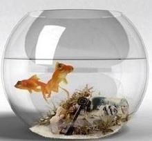 Clear Desktop Round Glass Vases Fish Bowl