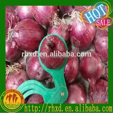 2015 onion best quality