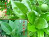 Organic agricultural adjuvant pesticides IOTA-2000-186