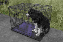 Dog Crates Cages Puppy Pet folding metal foldable 24 30 36 42 48inch dog cages with handle ABS tray