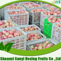 Fuji Apples Fresh Quality Grade A Fuji Apples HOT SALES
