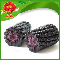 Sweet corn black purple corn maize for human consuption