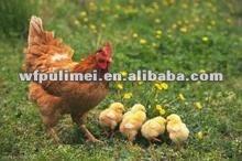 Inyección de Ivermectin,inyección de pollo,inyección veterinaria