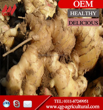 new crop 2015 price fresh ginger/air dried ginger/half-dried ginger mesh bag sale