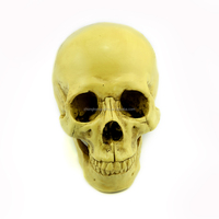 Wholesale 1:1 top-quality replica resin skulls for DIY, resin skull heads G010 skulls for crafts