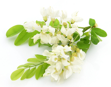 wholesale extract Quercetin 98% UV 95% HPLC