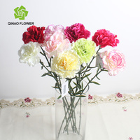 Supply high quality long stem flowers carnation with favourable price