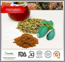 Top quality Natural Yerba mate extract 10:1, Paraguay Tea extract powder, Bulk wholesale Yerba mate extract