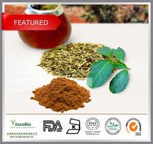 Top quality Natural Yerba mate extract 10:1, Paraguay Tea extract powder, Bulk wholesale Yerba mate extract
