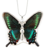Unique beautiful REAL butterfly jewelry