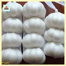 China Pure White Garlic