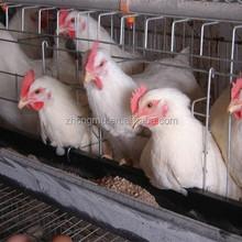 Galvanizado soldadas de arame de aves de alta qualidade gaiola de galinha para venda 3 nível 120 aves camada de frango gaiola