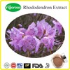 Free sample Rhododendron Extract/Rhododendron Extract powder/Drynaria Fortunei P.E.
