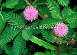 Natural Mimosa extract from Factory