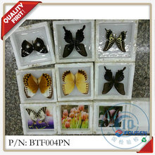FOUSEN dried and real butterfly natural art