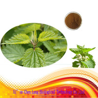 The Lowest Price 81-25-4 Smartweed Nettle Leaf