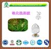 GMP factory supply anti-inflammatory analgesic high quality Sophocarpine extract