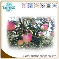18kg carton gala apple 100/113/125