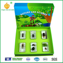 New insect collection teaching aids for kindergarten