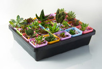 Plastic Colorful Small Square Flower Pots nursery seedling plate