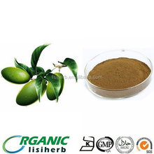 ISO 13 years manufacturer supply Olive leaf extract Oleuropein powder in bulk