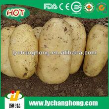 2014 fresh potato for sale