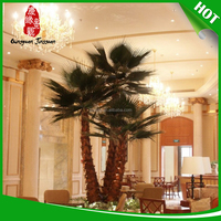 factory outlets tissue culture date palm