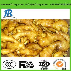 新鮮な生姜、 中国の新鮮な生姜2014年、 中国産の新鮮な生姜
