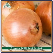 Fresh Golden Onion yellow onion Supplying