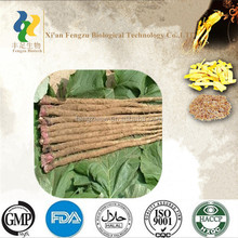 Superior high quality Burdock Root extract powder
