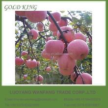 Yantai New Red Fresh Fuji Apple Fruit
