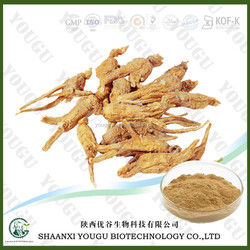 free sample ginseng extract,HACCP KOSHR FDA natural free pesticide 10% 80% ginsenoside extract red korean ginseng