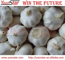Hot Sale Fresh New Frozen Normal/Pure Natural Garlic with Good Quality