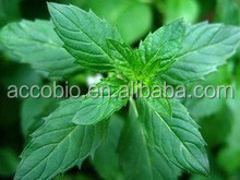 Natural Peppermint Extract,High quality Peppermint Extract powder/Menthol 1% to 8%, 4:1 to 20:1