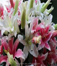 Tigre artificial orquídea