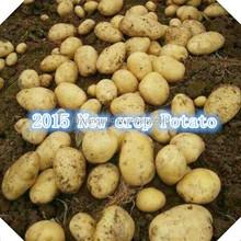 Shandong 2015 hot sale holland potato150g