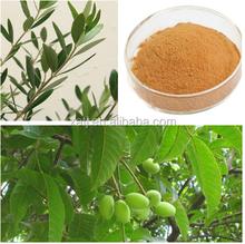 Superb quality Olive leaf extract powder in Fujian