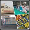 China Exporting 29*39cm Black Food Grade Blister Fresh Peach Tray