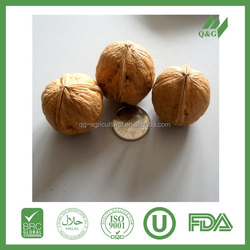 Modern dried fruit blended walnuts