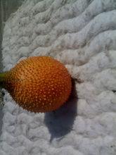Gac seeds(Momordica cochinchinensis)