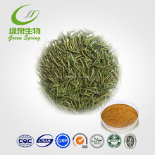 Green tea extract /ISO Green Tea Leaf P.E. Polyphenols 99% HPLC,green tea leaf extract powder